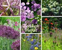 Zierlauch-Vielfalt