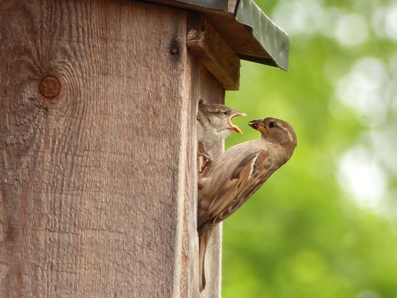Vogel wird gefüttert