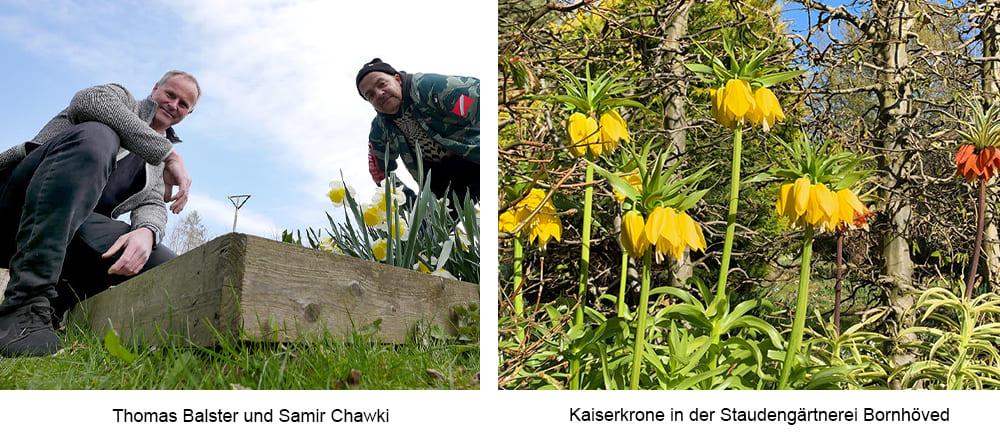 Beitragsbild-NDR-Podcast-Balster-und-Chawki-Staudeng-rtnerei-Bornh-ved