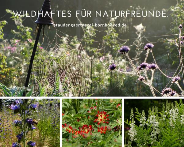 Wildhaftes für Naturfreunde im Angebot