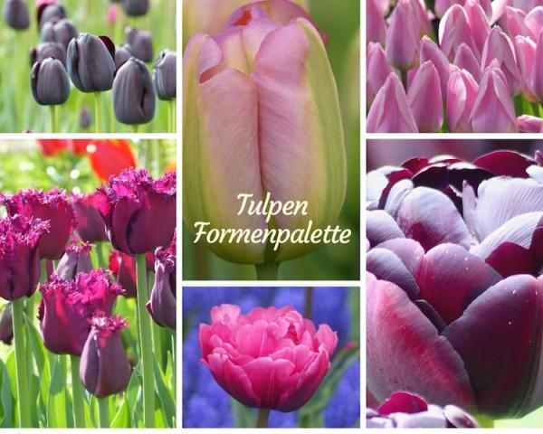 Tulpen Formenpalette