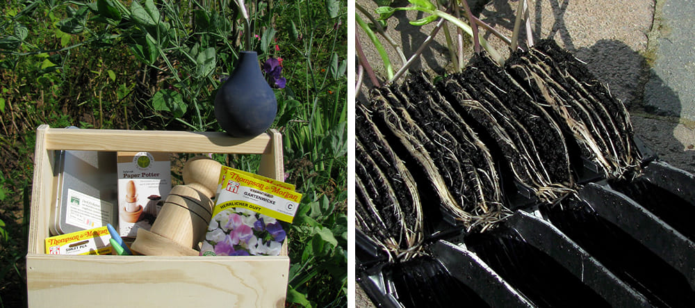 Blogbeitrag-Wicken-Staudeng-rtnerei-Bornh-ved