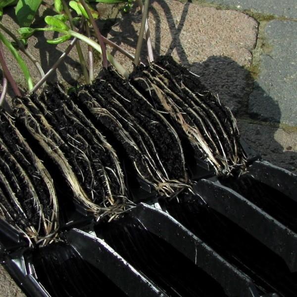 Rootrainers Klappmodul