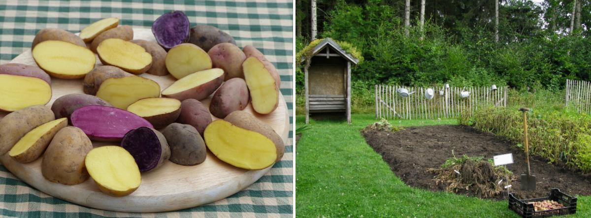 beitragsbild-kartoffeln-lagern