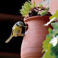 Ton-Nisthöhle, Vogelpott mit Möglichkeit zur Dachbegrünung