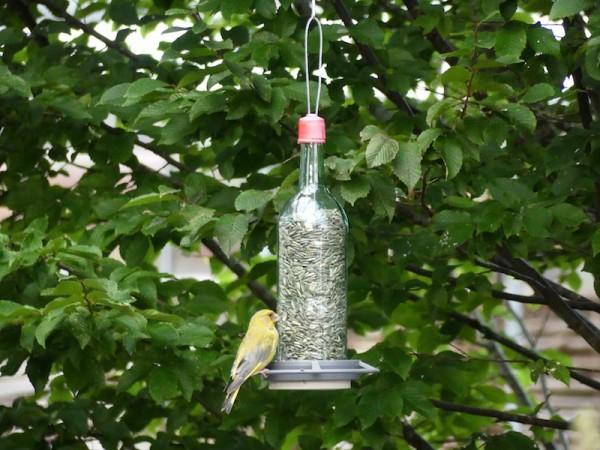 Vogelfutterflasche mit Grünfink