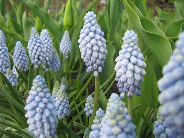 Viele kleine Frühlingsboten im Angebot