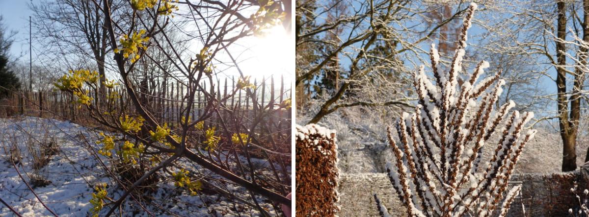 beitragsbild-der-garten-im-winter