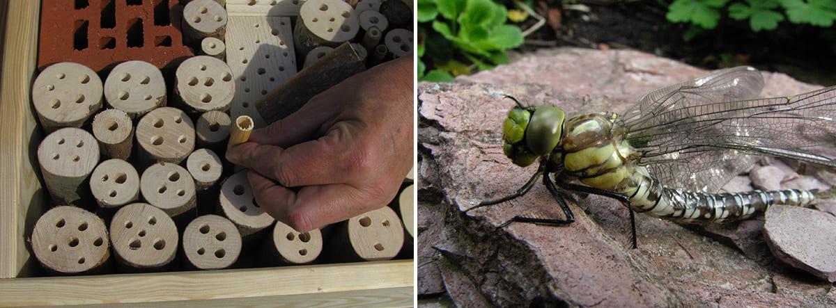 beitragsbild-gute-vorstaetze-insekten