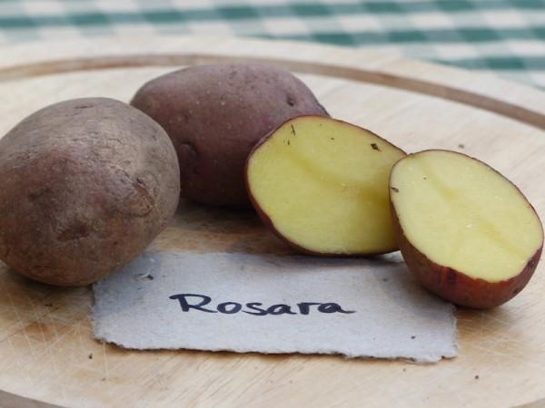Rosara