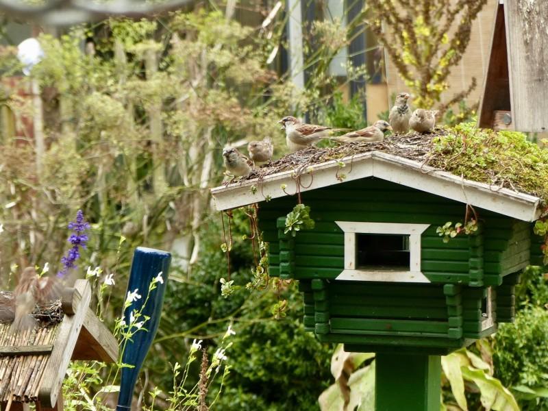Vogelhäuschen mit Dachbegrünung