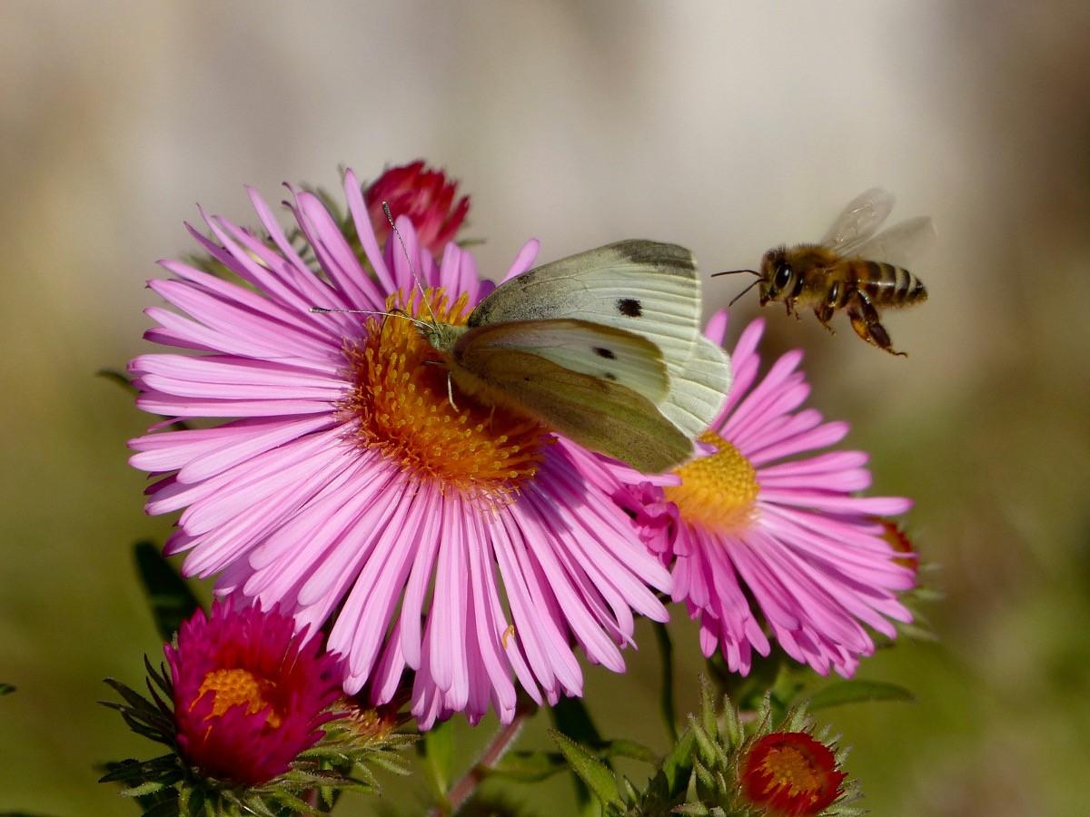 insekten im garten dankbaren helfern ein zuhause bieten das gartenjahr shop staudeng rten